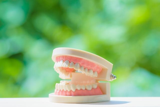 両親の歯並びは子供に遺伝するの?しないの?どっち?